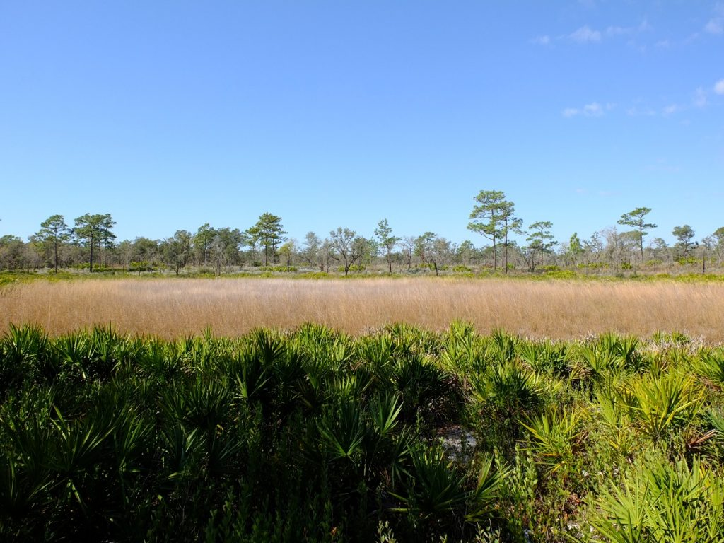 Seasonal depression marsh dominated by tall grasses.